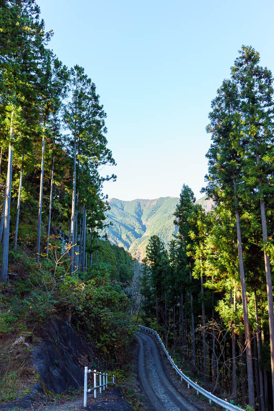Japan-Tokyo-Hiking-Mount Kawanori - The forest logging track and the peaks from earlier in the background. Compare that to the picture a few before this one and you can see its a long wa