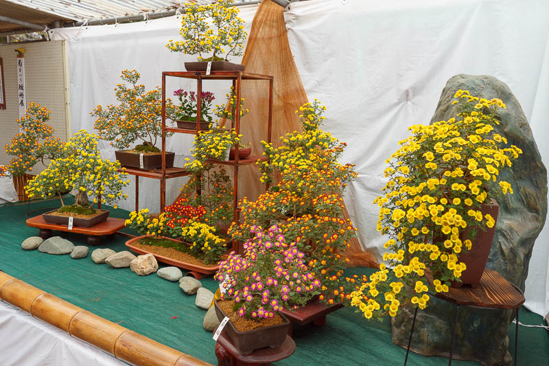 Japan-Tokyo-Kawagoe-Museum - Even the bonsai flower fair was partially under construction. I like the bonsai flowers though.