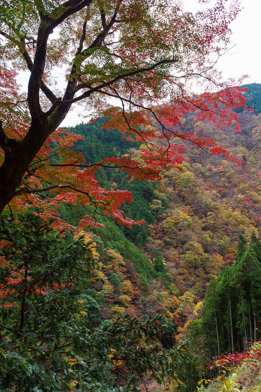 Japan-Okutama-Lake-Hiking - Of course there are still views to be had, and there are many old Japanese people with their tripods taking photos of leaves. I should mention, on the