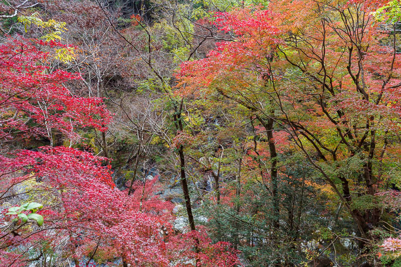 Japan-Okutama-Lake-Hiking - Some more colorful leaves. The descriptions of these photos are going to get shorter.