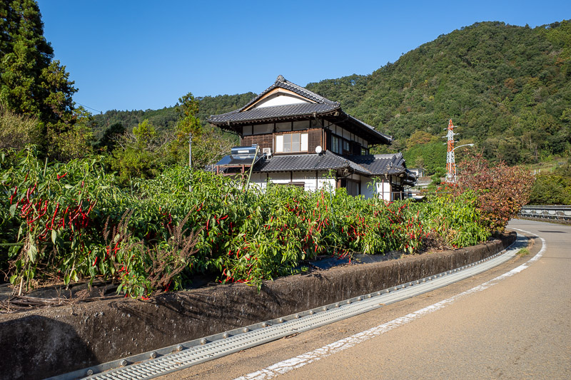 Japan-Tokyo-Hiking-Mount Kuratake - The road back passed this nice house growing delicious chillis. I pulled a couple off and chomped on them on my stroll back to the station.