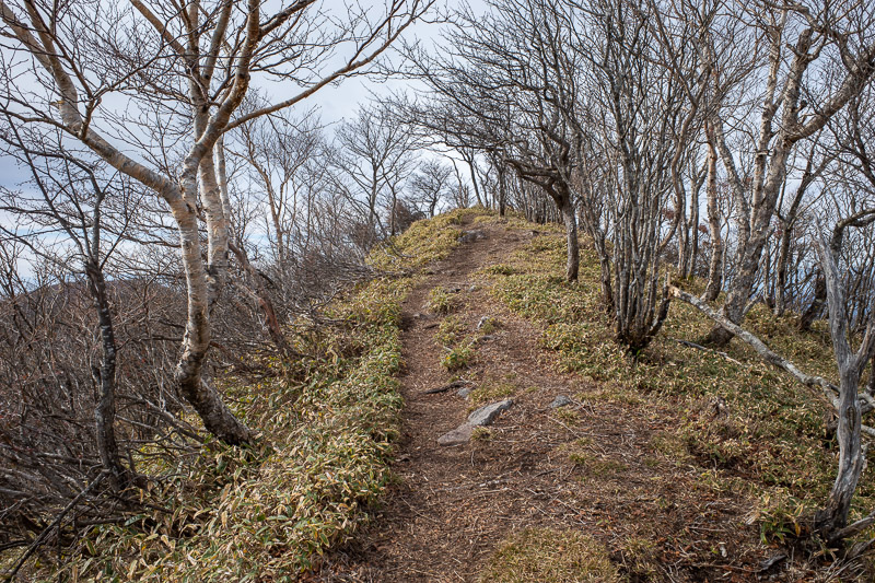 Japan-Hiking-Mount Akagi - Time to head down and up to the next peak, via more low bamboo.