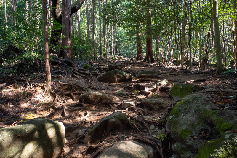 Japan-Tokyo-Hiking-Mount Tsukuba - Time to engage in some forest bathing. It is now legally mandated that all salary men spend one day a month forest bathing (unpaid).