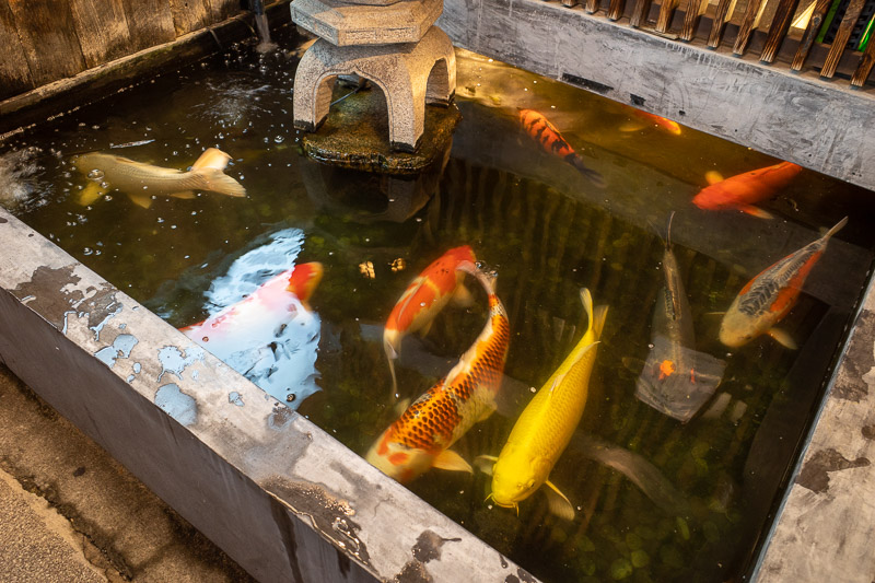 Japan-Niigata-Food-Curry - This restaurant has a koi pond that goes inside the restaurant. The fish can decide if they want to be outside or inside.