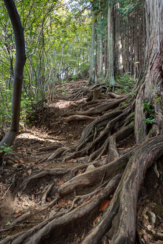 Japan-Tokyo-Hiking-Iwatakeishiyama - Three peaks meant going up and down a few times. I like going up more than down. Heres some more tree roots.