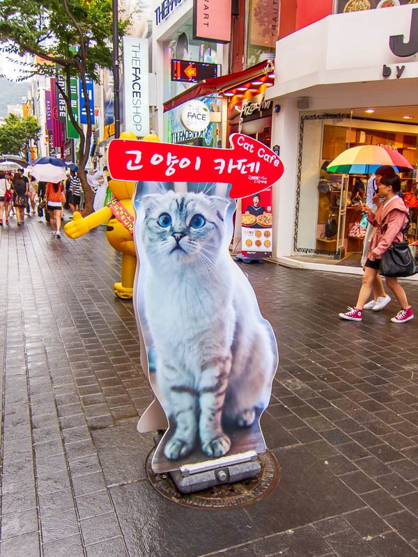 Korea-Seoul-Dongdaemun-Kpop-Dumplings - Korea and Japan have a lot in common, including cat cafes. I havent been (yet), because I will feel stupid being the only single person, and the only