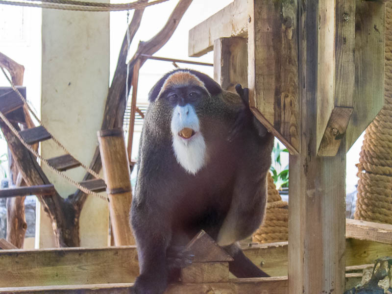 Korea-Seoul-Zoo - This asshole monkey is poking his tongue out at me. I returned the favour then mooned him for good measure.