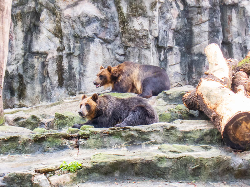 Korea-Seoul-Zoo - They have a few different kinds of bears, some were hiding, some were having their bile drained.