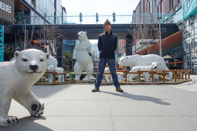 Korea-Incheon-Songdo-Hiking-Gaesan - Final photo for now, the polar bears felt right at home as it was again cold. I think they have eaten all the shoppers. I probably could have taken my