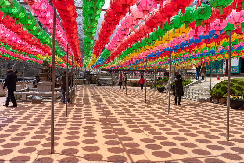 Korea-Hiking-Gyeryongsan - And then I was back down, and entering the Buddhist temple through the back entrance, enjoying the fluro lanterns in brilliant bright sunshine.