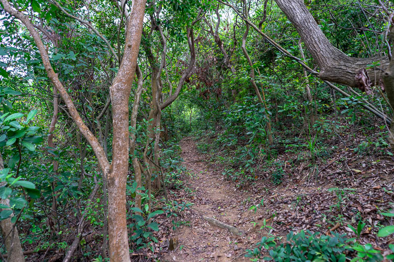 Hong Kong-Hiking-Lion Rock - Soon I joined a hiking trail, still no rain, I skipped gleefully.