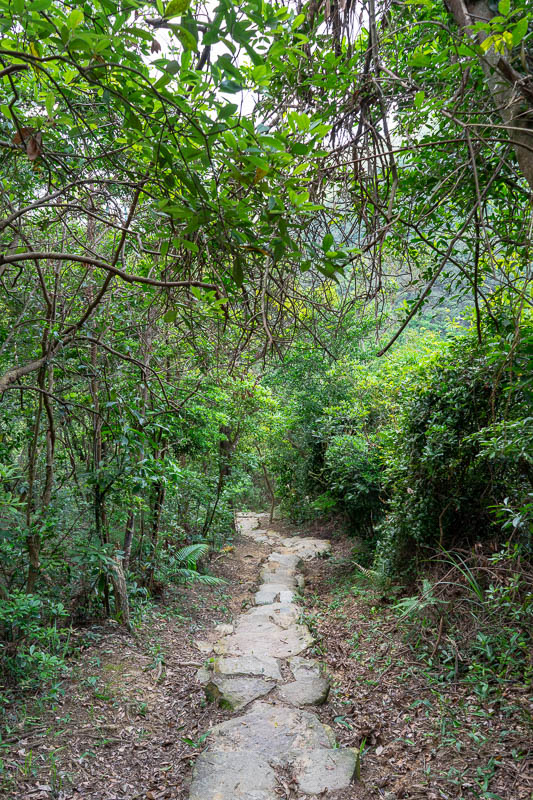 Hong Kong-Hiking-Sunset Peak - Part of the path up. Steep does not photograph.