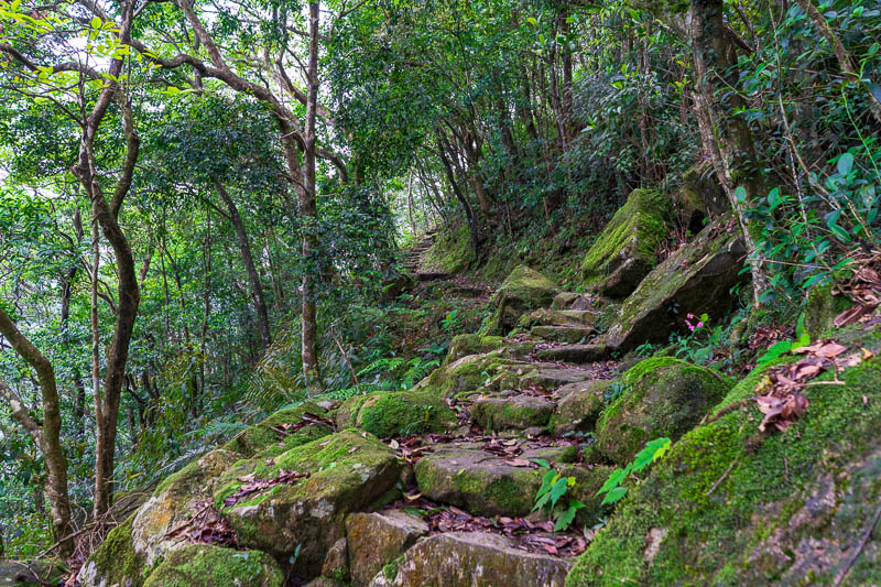 Hong Kong-Hiking-Sunset Peak - At times the path became very interesting and moss covered, but was never slippery.