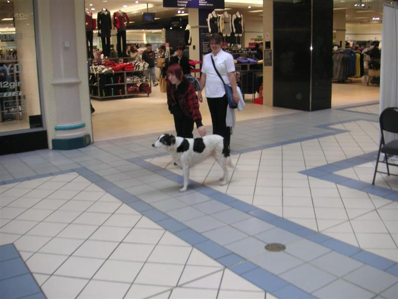 England-Oxford-Garden-Castle - You see dogs everywhere in london, in malls like this, on the train, not dogs for blind folks, just regular dogs.