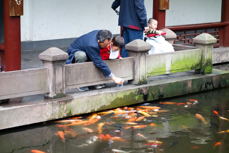 China-Chengdu-Jinli-Shopping Street-Peoples Park - The goldfish seem particularly massive here. If that kid fell in he might get eaten.