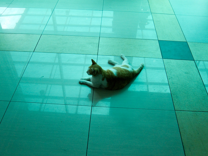 Malaysia-Johor Bahru-Mall-Market - This cat was enjoying the inside of the mega mall, the tiles were cool I guess.