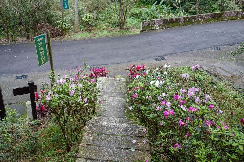 Taiwan-Shiding-Hiking-Huangdidian - And then the path came to a road, greeted by flowers, and a sign saying 180 minutes to the main road and town... surely not? Jogging time.