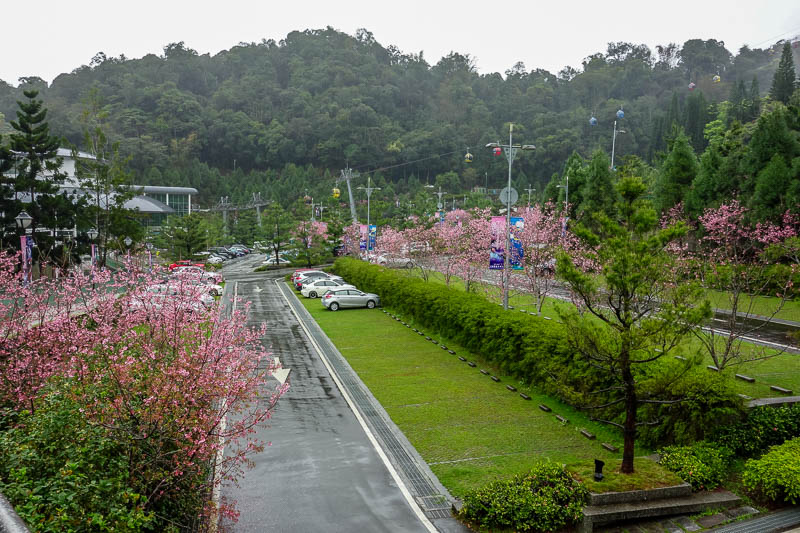 Taiwan-Sun Moon Lake-Rain - Just past the town is a ropeway station that goes up a big hill to... wait for it, a temple. Nice blossoms.