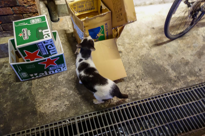 Taiwan-Taipei-Ximending-Food-Ramen - They also have a cat.
