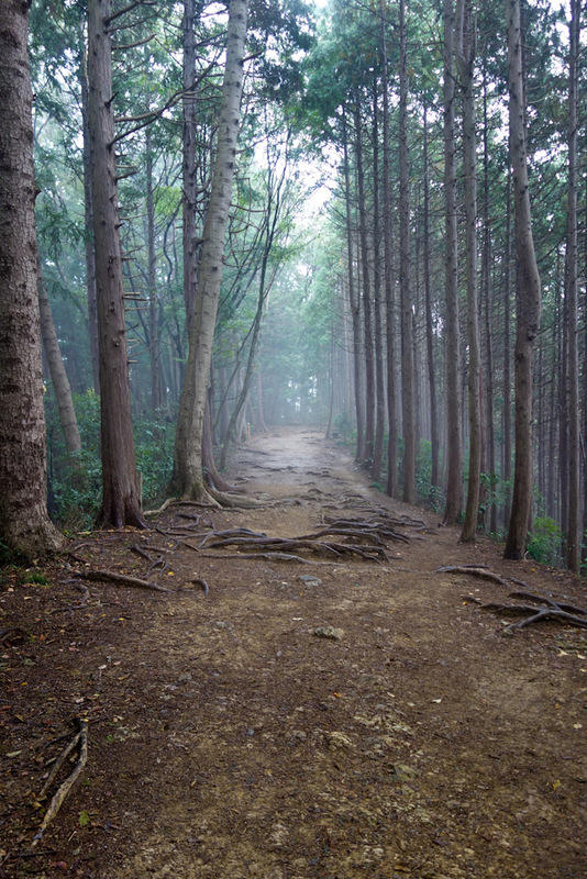 Japan-Tokyo-Hiking-Mount Takao - I went back down on a different trail, and the fog set in to make it all the more exciting. I saw pokemons darting about in the woods but they left me